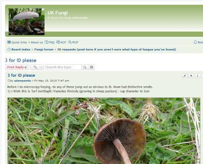 uk fungi
